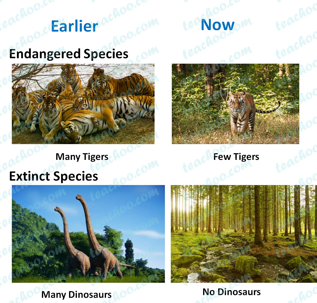 extinct-and-endangered-species---teachoo.jpg
