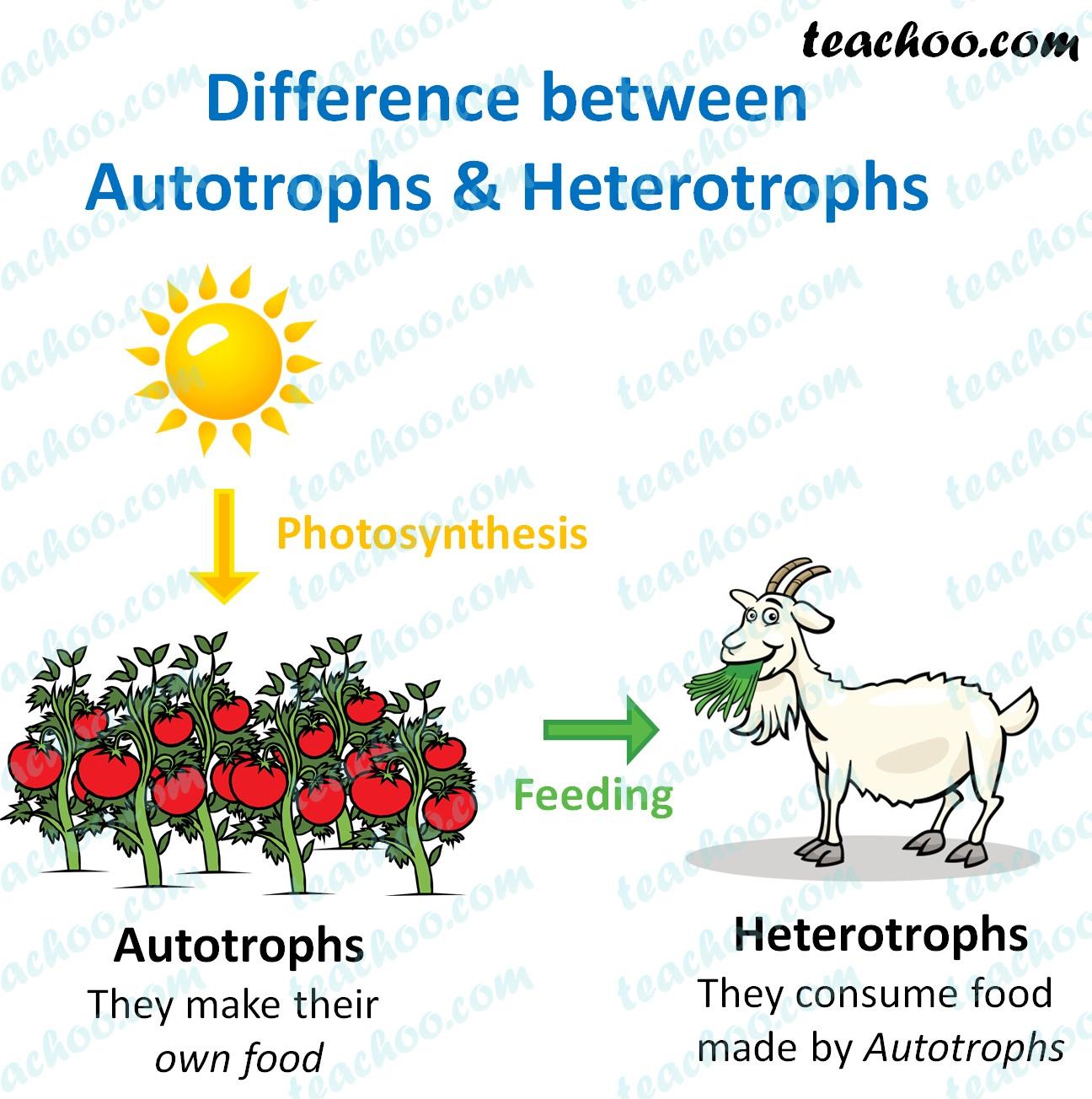 difference-between-autotrophs-and-hetrotrophs---teachoo.jpg