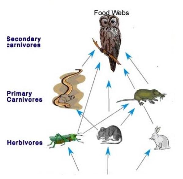 Food Web Example with Image - Teachoo.jpg
