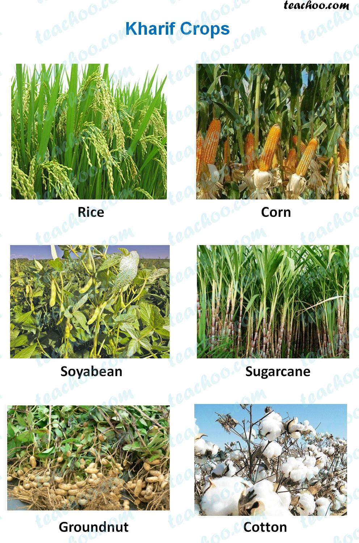 kharif-crops---examples.jpg