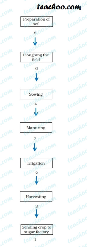 ncert-q10---answer---sugarcane-crop-production-steps---teachoo.jpg