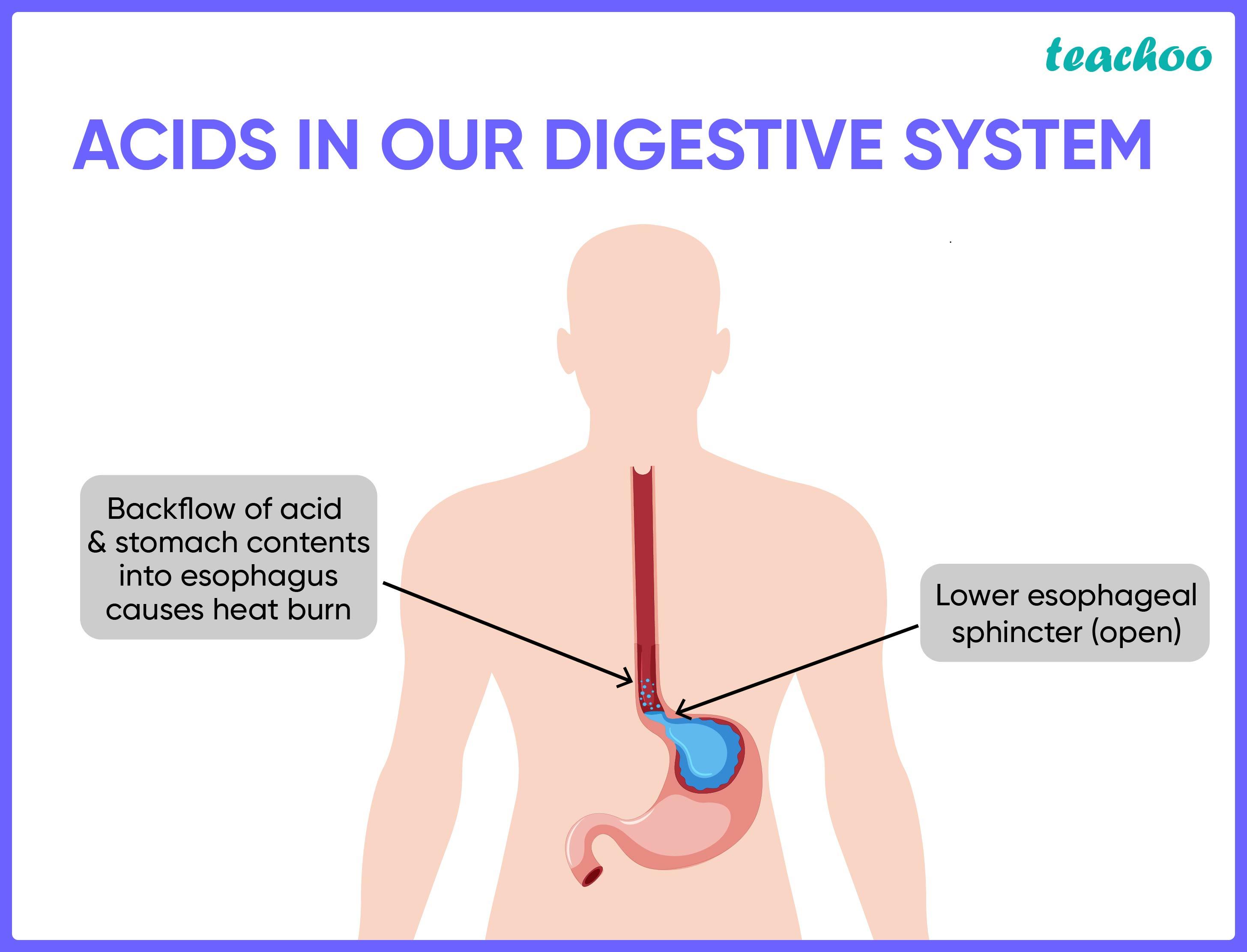 Acid, Base and Salt in daily Life-Teachoo.jpg