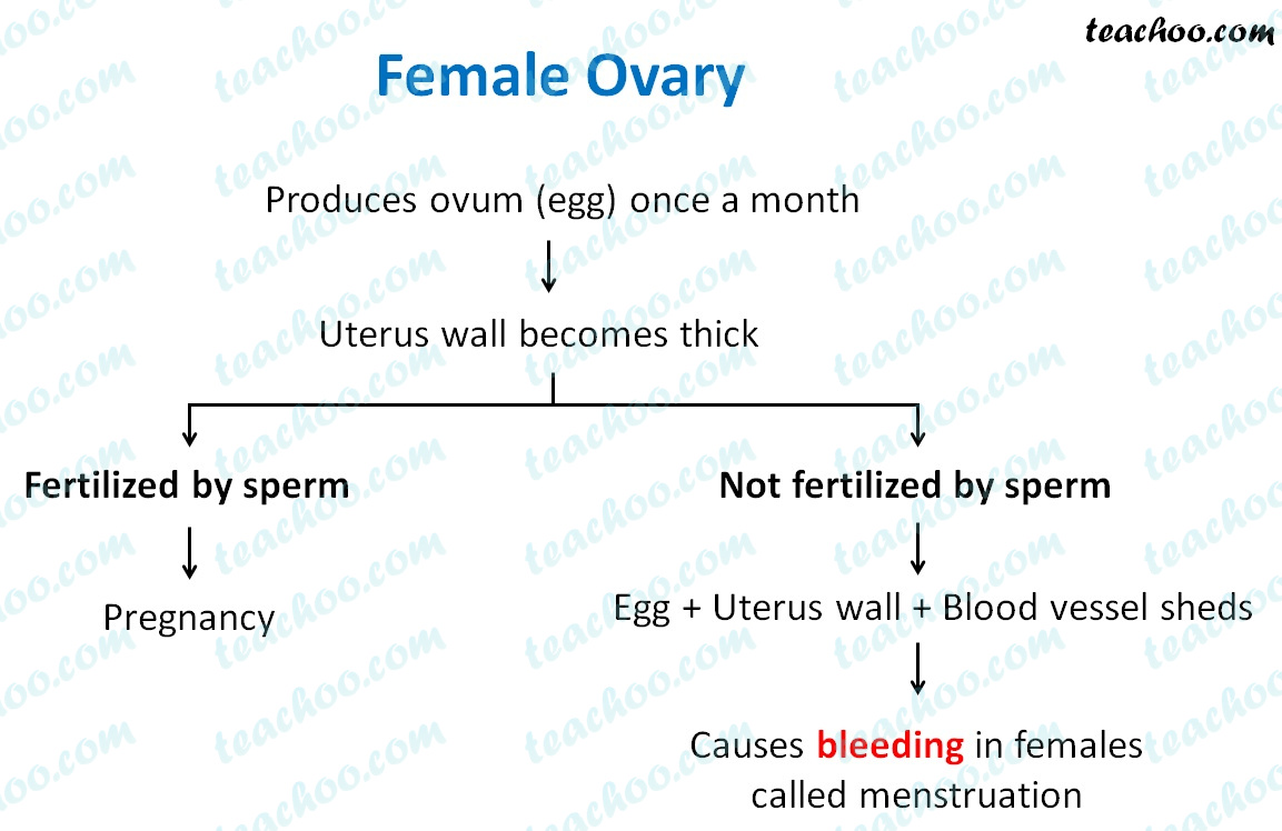 female-ovary---teachoo.jpg