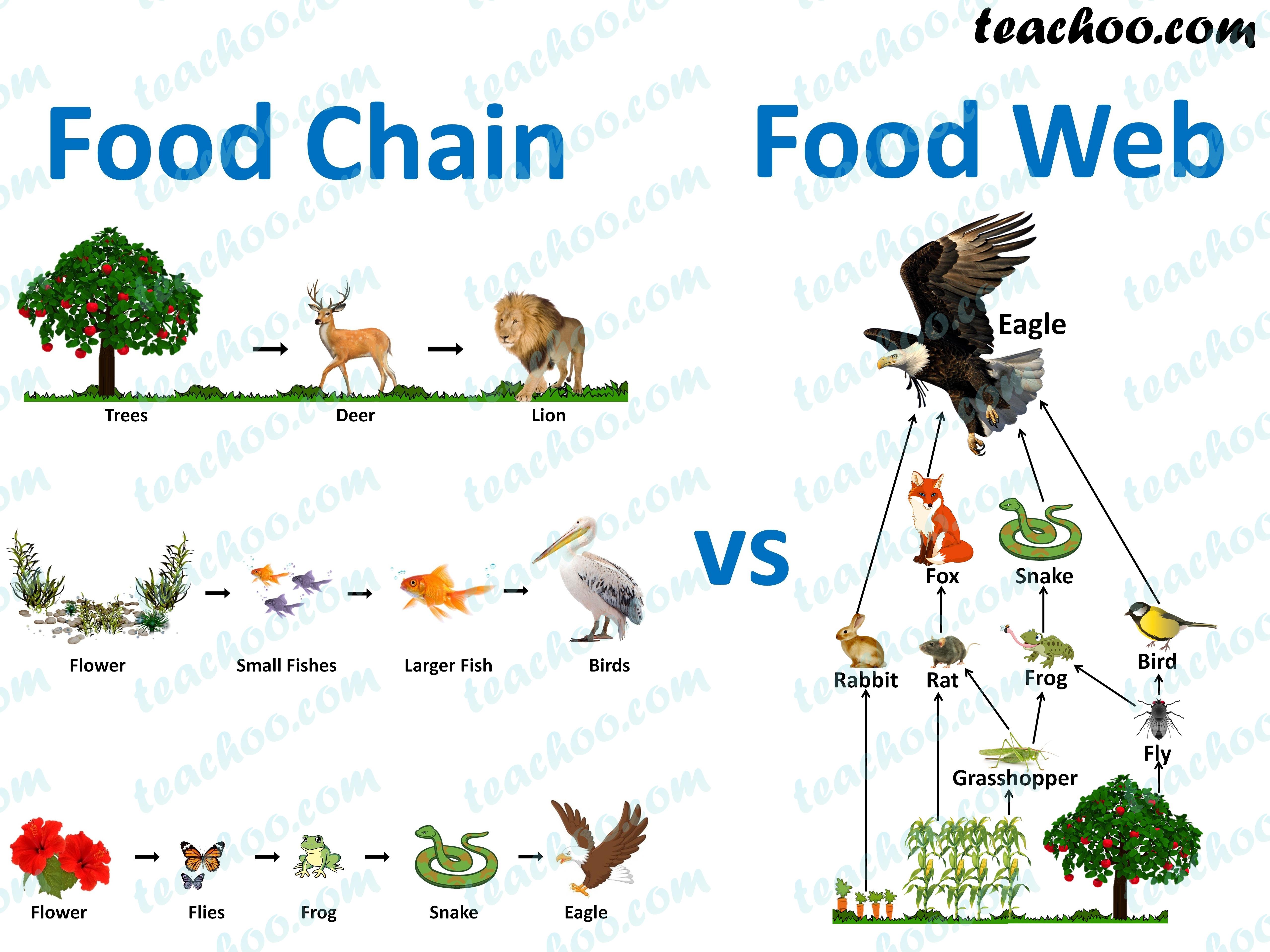 food-chains-vs-food-web---teachoo.jpg