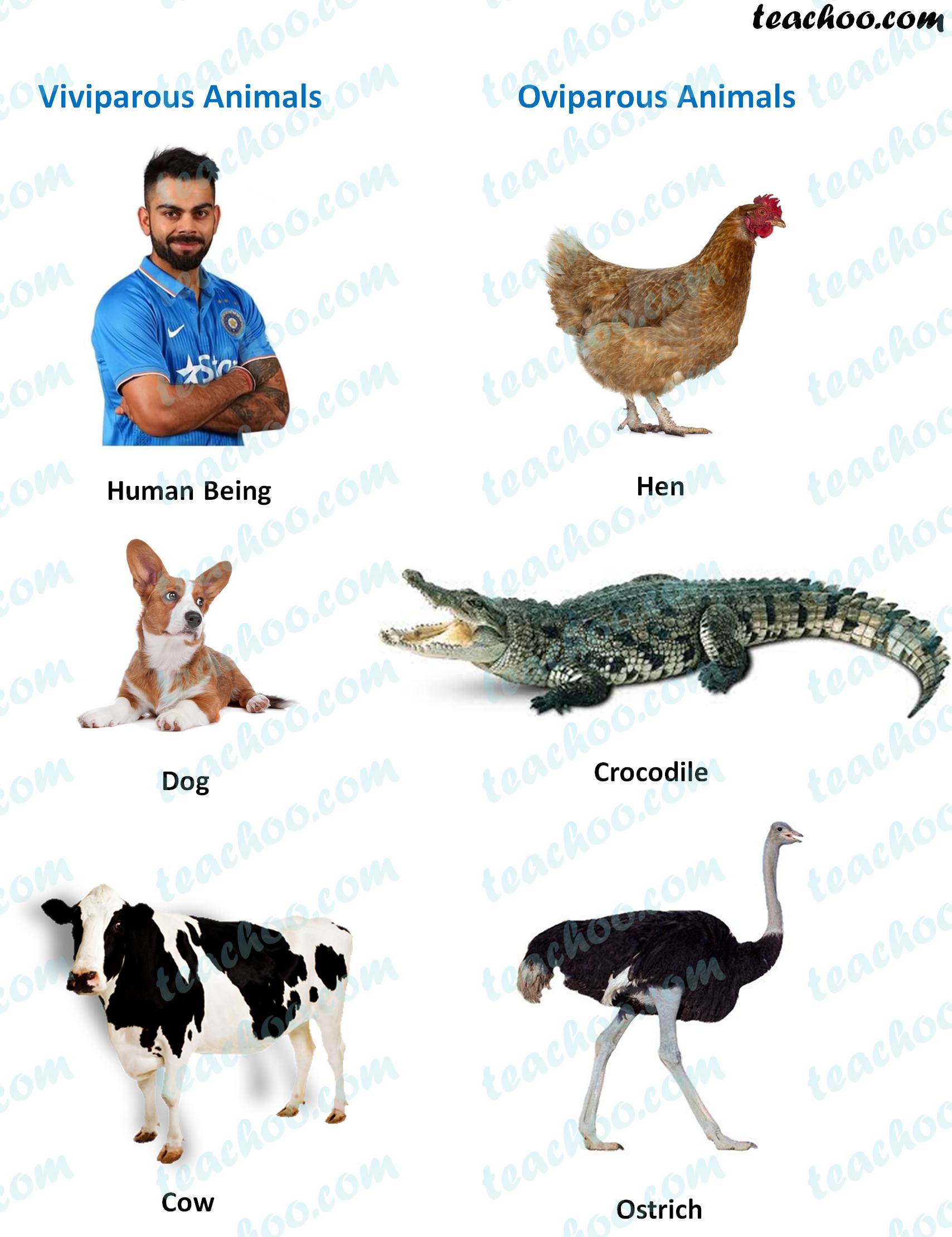 viviparous-animals-oviparous-animals--teachoo.png