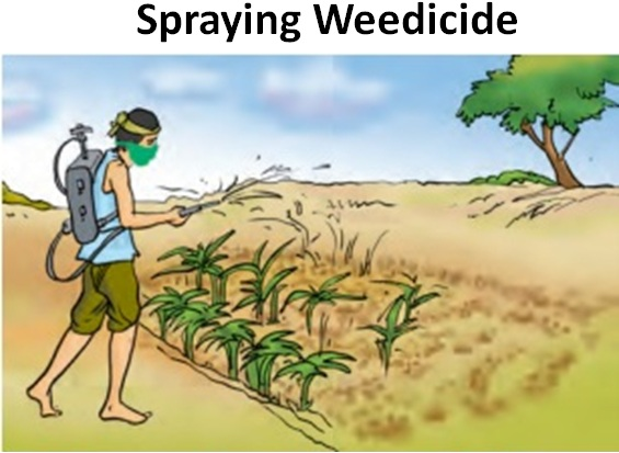 Spraying Weedicide.jpg