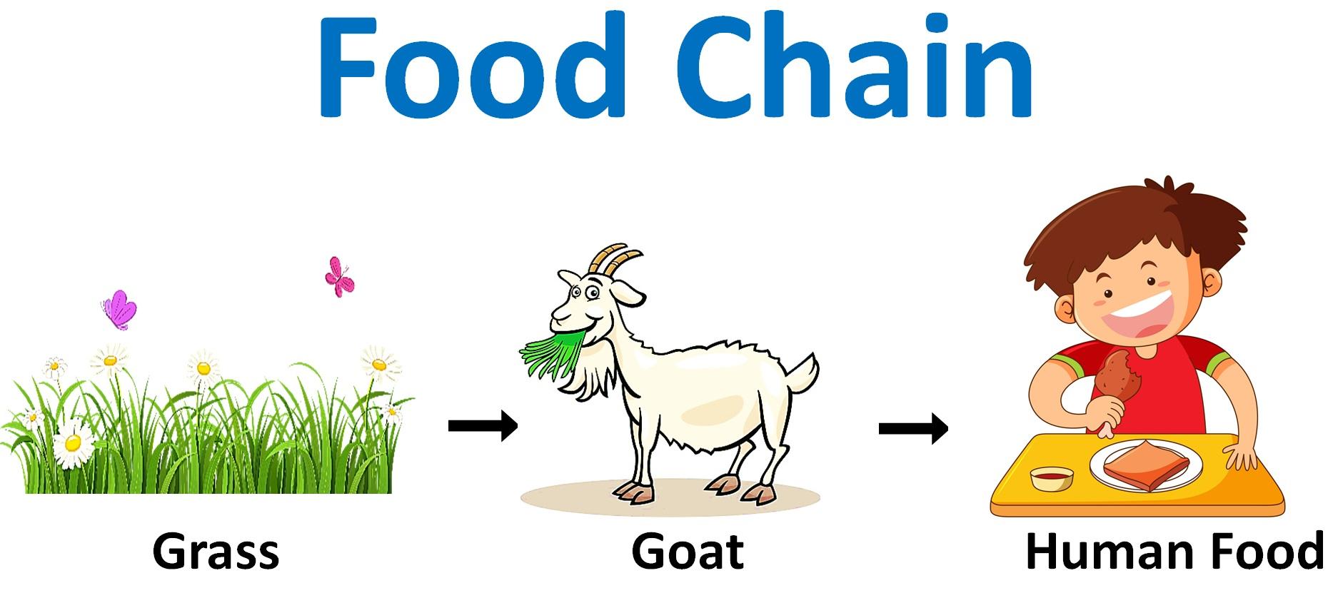 Food Chain Ncert Q6 - Teachoo.jpg