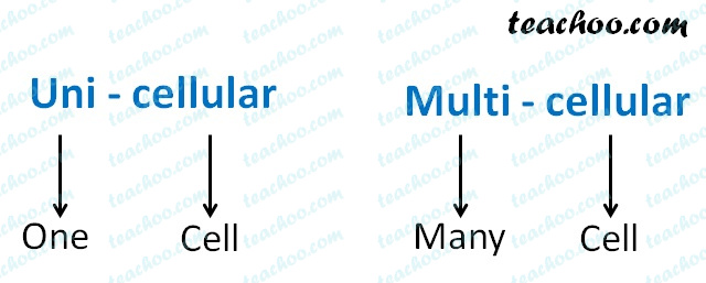 unicellular-and-multicellular-meaning.jpg