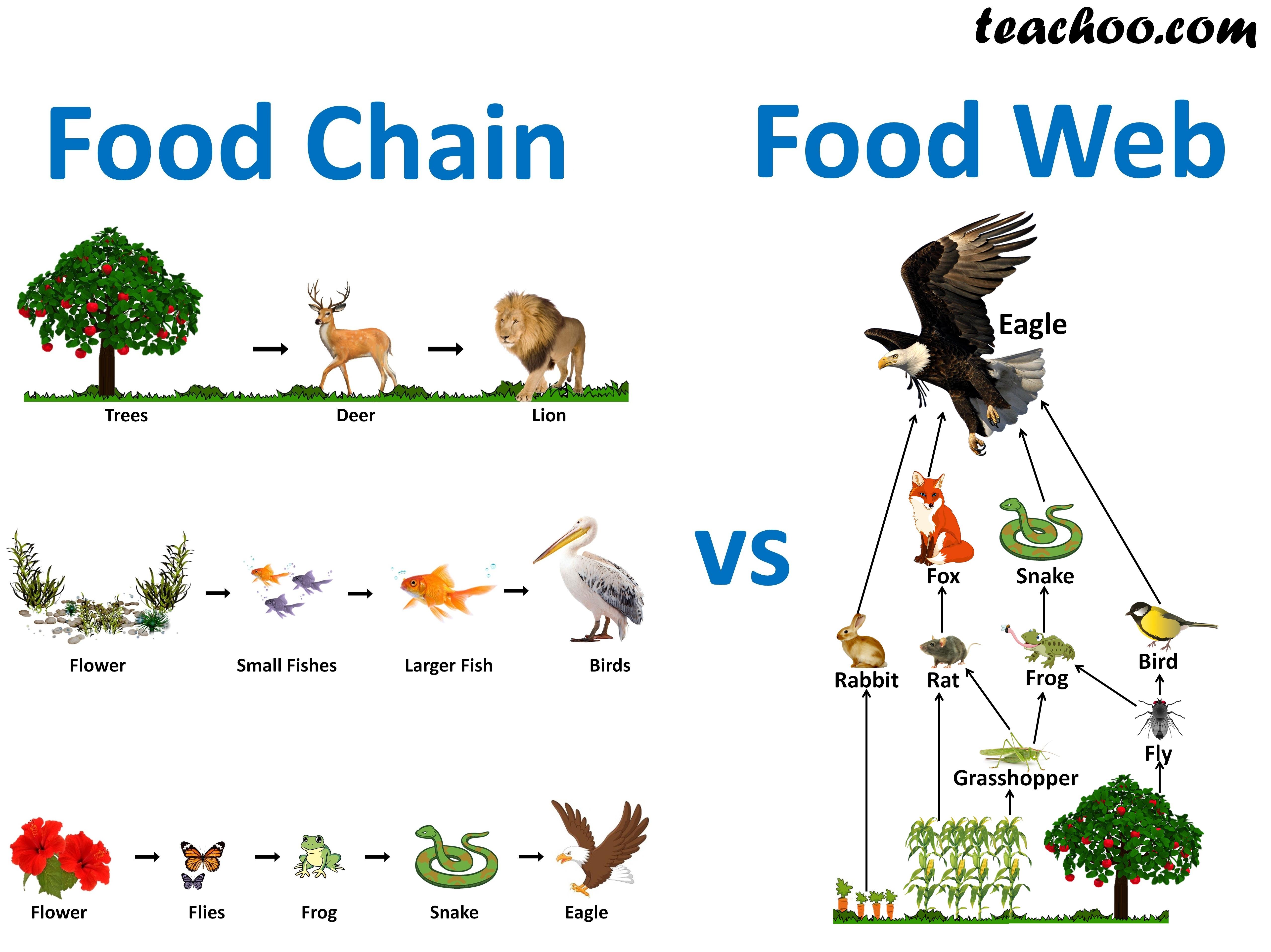Food Chains vs Food Web - Teachoo.jpg