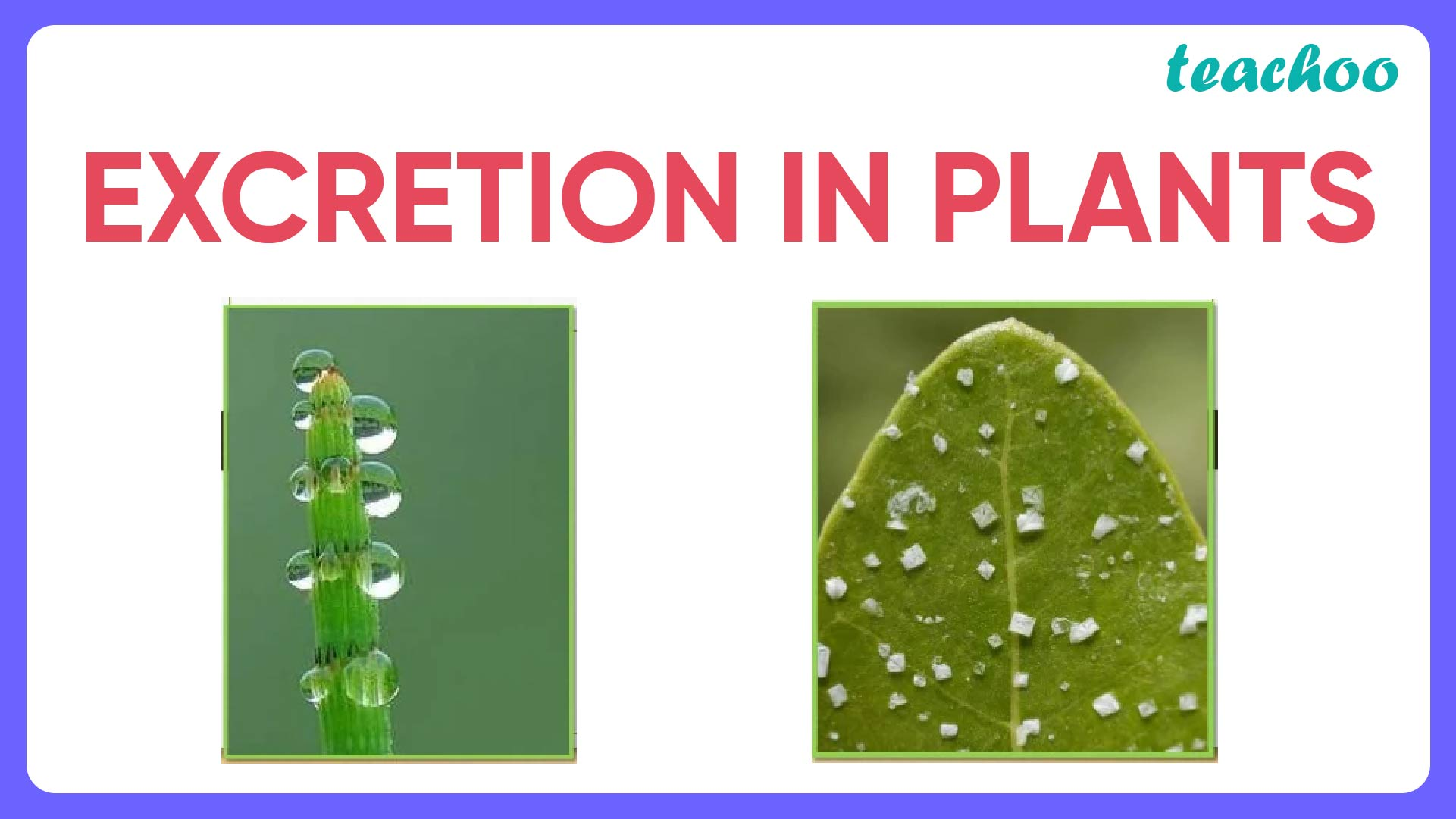 Excreation In plants-01.jpg