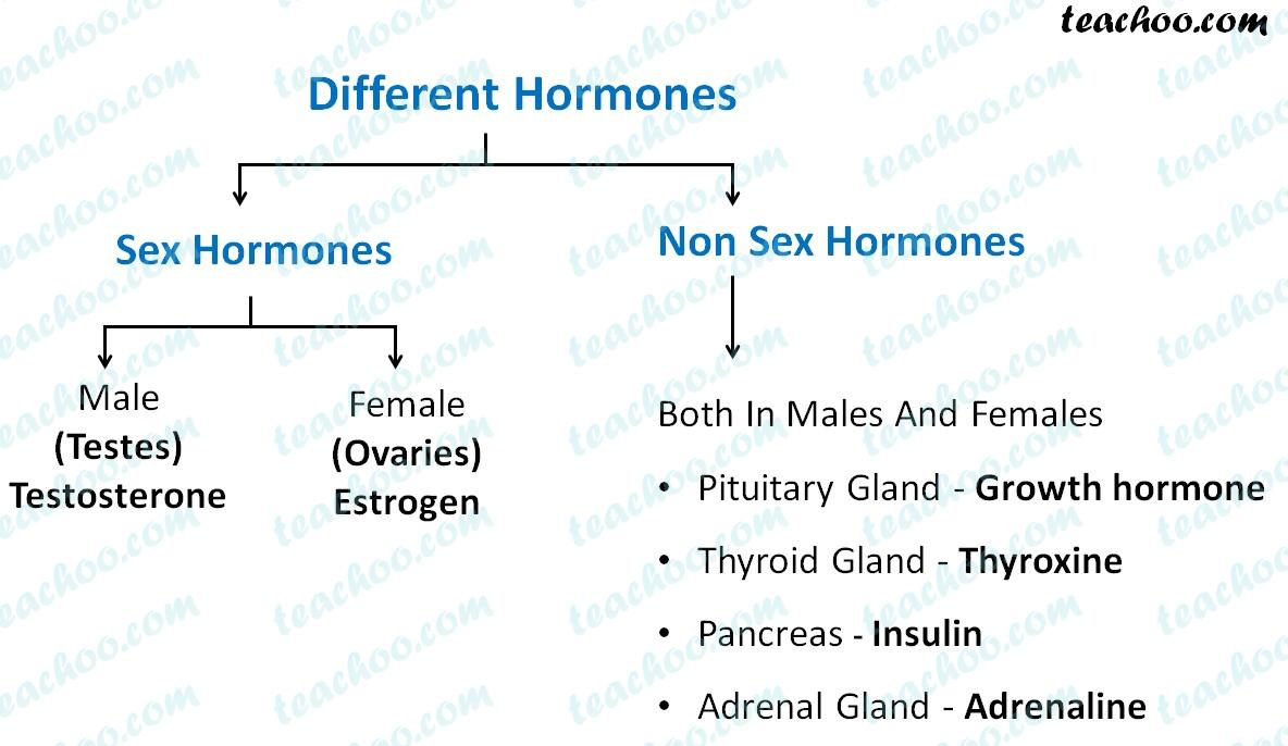 different-sex-and-non-sex-hormones.jpg
