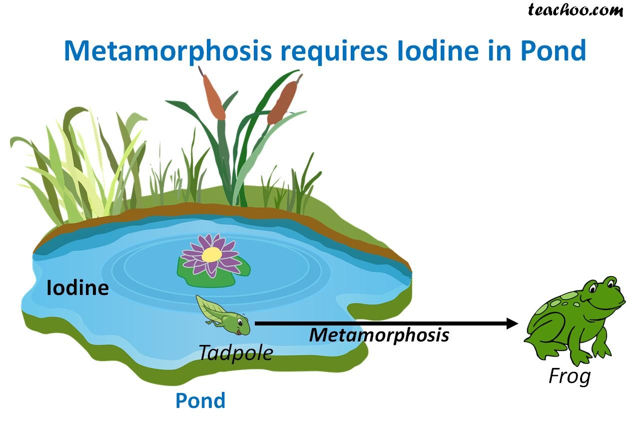 Meramorphosis requires lodine in pond - Teachoo.jpg