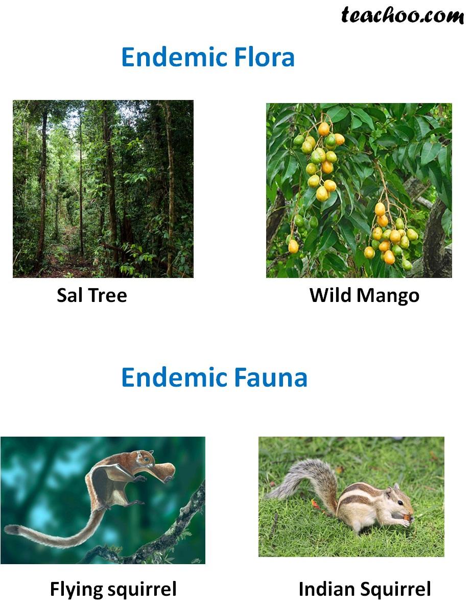 Endemic Flora.jpg