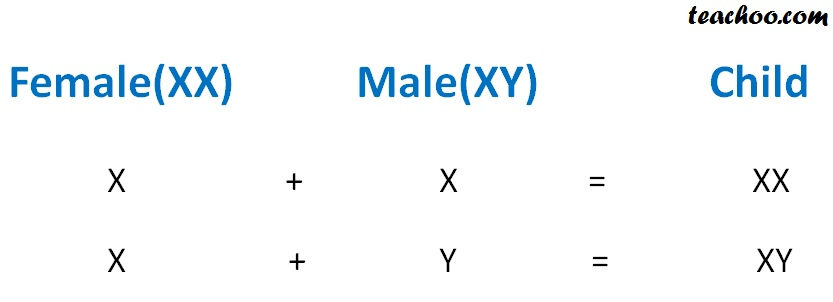 Female (xx) Male (XY) Child - Teachoo.jpg