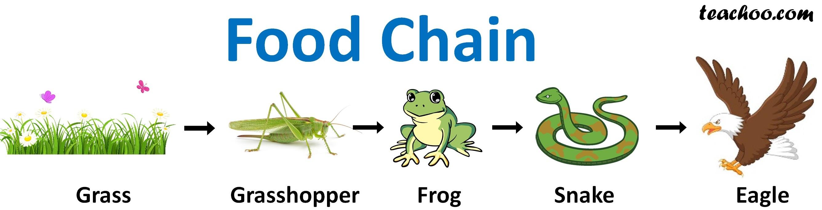 Food Chain (Imp Ques) - Teachoo.jpg