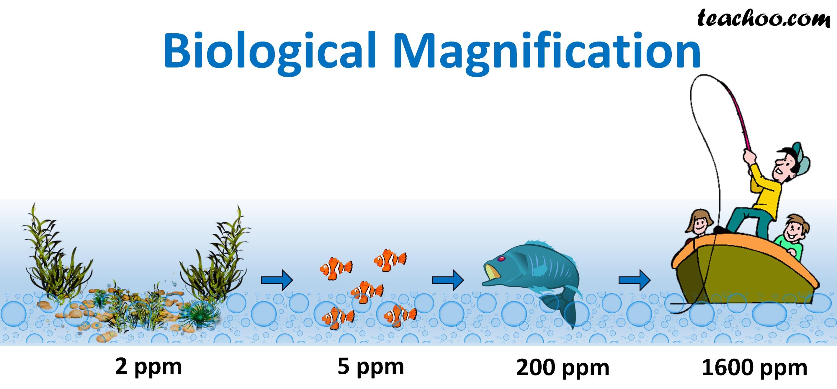Biological Magnification - Teachoo.jpg